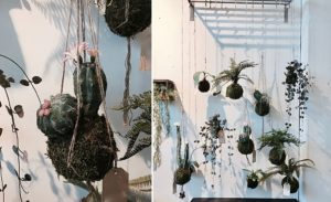 pflanzen loods5 interior Blumen Dekor Möbel holland