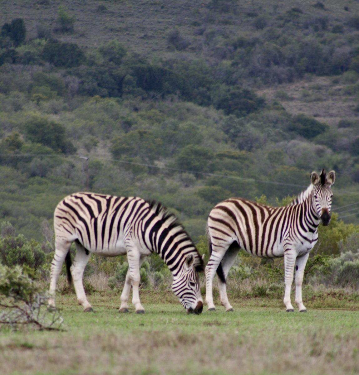 Südafrika badepralie Naturseifen reisen reiseblog