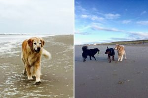 Bergen aan zee, Golden retriever, Holland mit Hund, Holland mit Kinder, Holland, Bergen, Alkmaar, Badepraline on Tour, Lemon Myrtle, Duschriegel, Duschcreme, Badepraline
